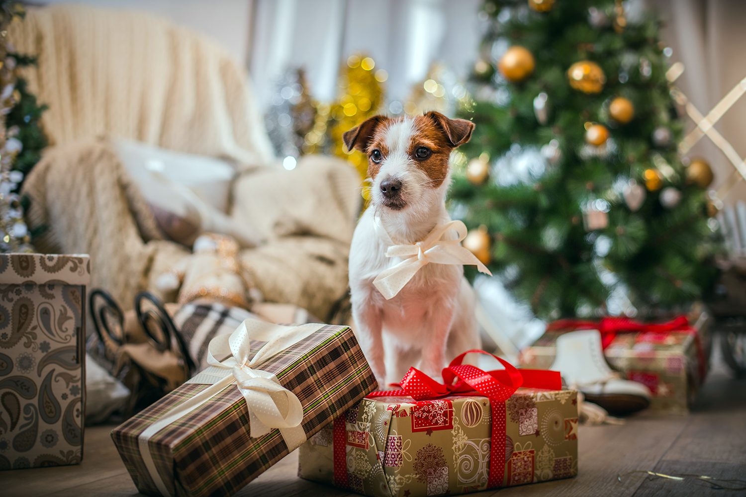 Christmas foods you really shouldn't give your dog