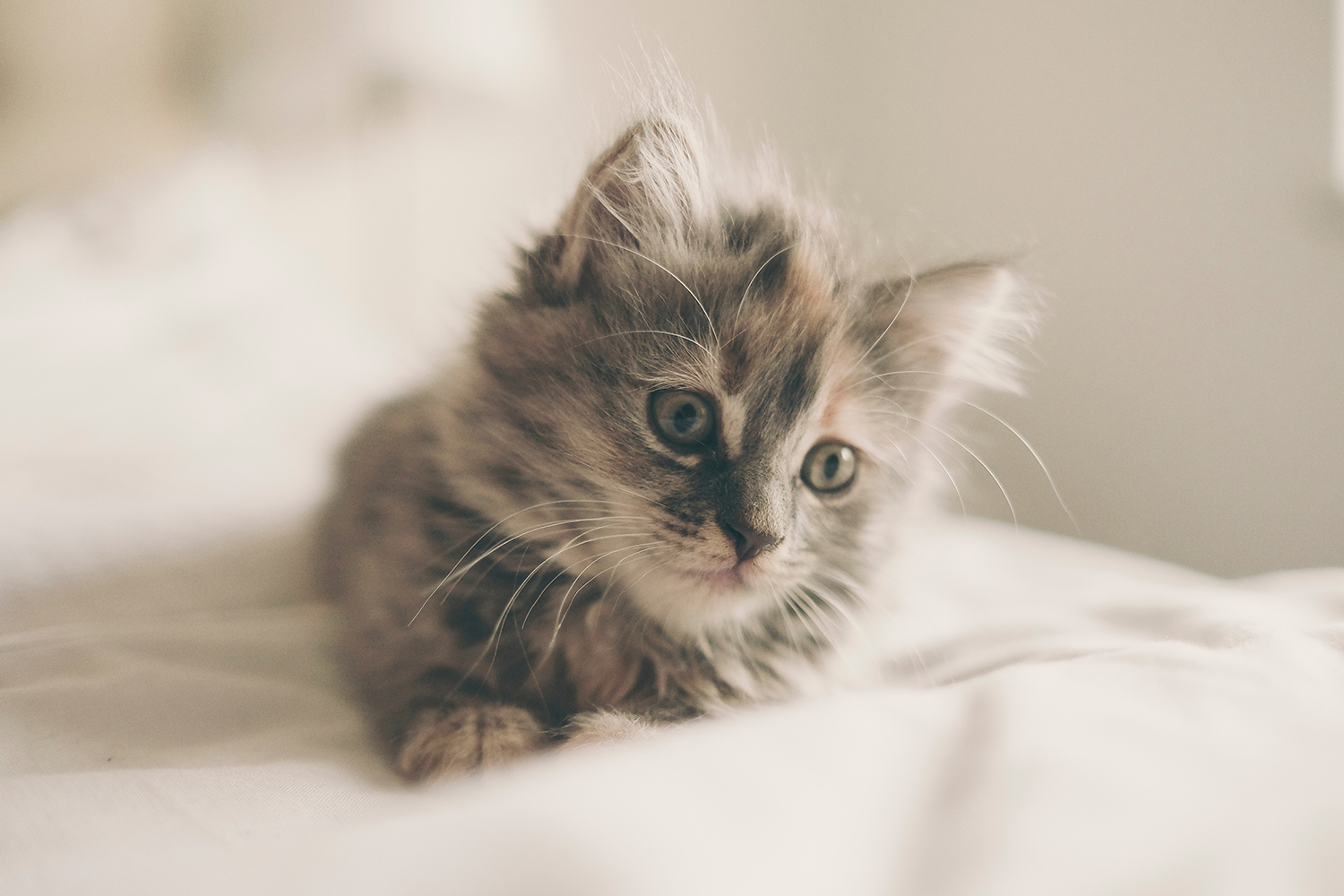 Do Kittens Get Lonely? Will My Kitten Be Lonely While I Am At Work?
