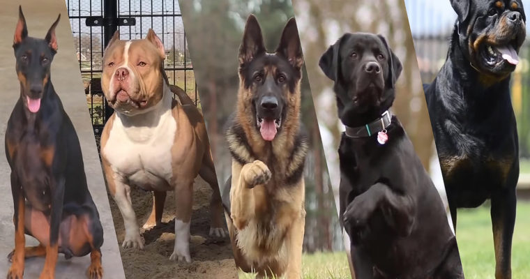 Which dog is right for me?