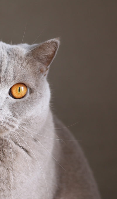 Cat Health and Hygiene