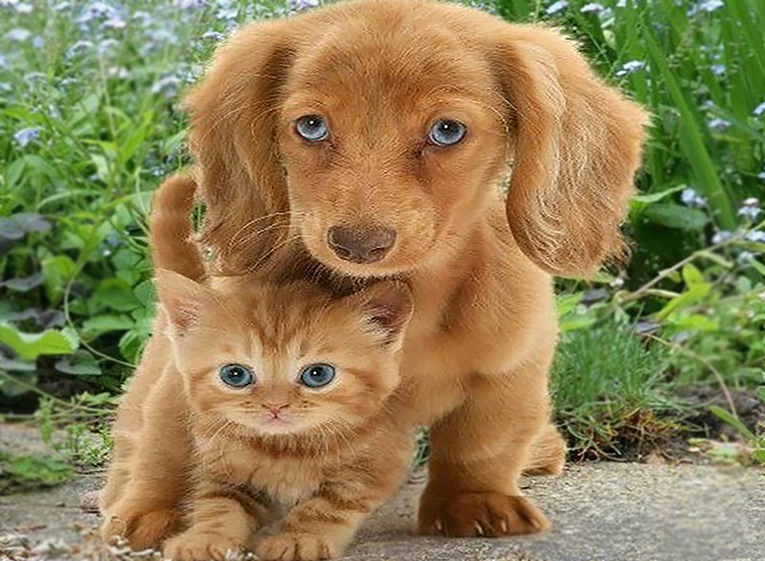 Kitten vs Puppy: Which Is Better? Which Would Suit You Best?