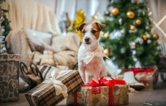 Christmas foods you really shouldn't give your dog